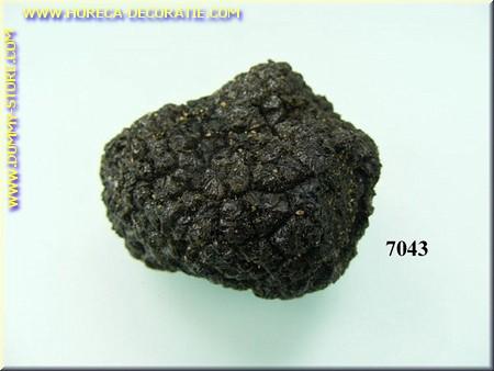 Trüffelpilz schwarz klein