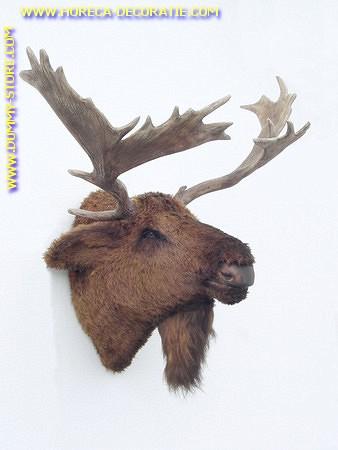 Moose (head) 0,61 meter