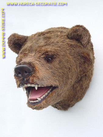 Bear (head)) 0,66 meter