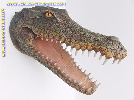 Krokodilkopf, 0,77 Meter