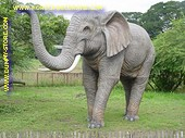 Elephant, l: 3,70, h: 3,10 mtr