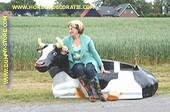 Koeien bank, Levensgroot ZW
