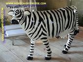 Zebra koe, Levensgroot