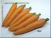 Karottenbund (6 Stück)