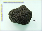 Truffle black small