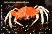 Granseola krab XXL, (C4) - Lxbxh: 32x23x8 cm - Visdummy