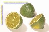 Limonen, halb, 3 stück - Attrappe