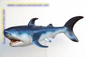 Haai, lengte: 1,50 meter