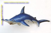 Hammerkopfhai, länge: 2,42 meter
