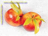 Apples, GIGANT, 2 pcs. - dummy