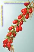 Tomaten am Strang, L: 50 cm  - dummy