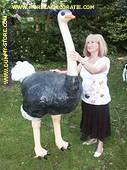 Struisvogel, hoogte: 1,80 mtr, Br: 1,30 mtr