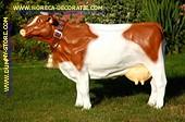 Koe met bel, bruin-wit