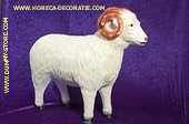 Ram Decoratie