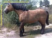 Paard, werkpaard