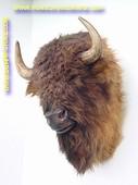 Buffel (kop) 0,82 meter