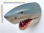 Haai (kop) 0,85 meter