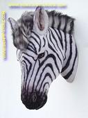 Zebra (kop) 0,64 meter