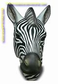 Zebra kop