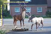 Hert en Eland decoratie - AANBIEDING