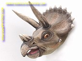 Triceratopskopf, 0,90 Meter
